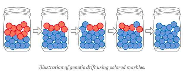 Description: Illustration of genetic drift
